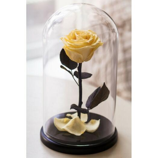 Роза в колбе премиум Желтая 27*15*6см