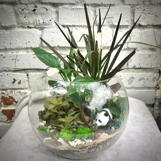 Тропический флорариум «Панда»