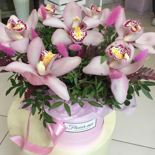 Стойкие орхидеи