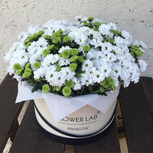 Хризантема Box: букеты цветов на заказ Flowwow