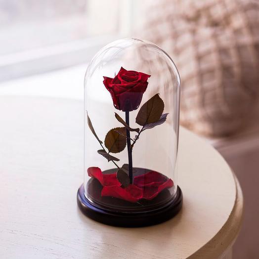 Роза в колбе «Premium» бордовая