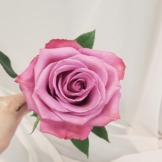 Роза Моди Блюз