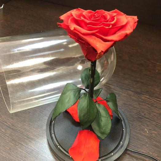 Rose stabilized in a necklace