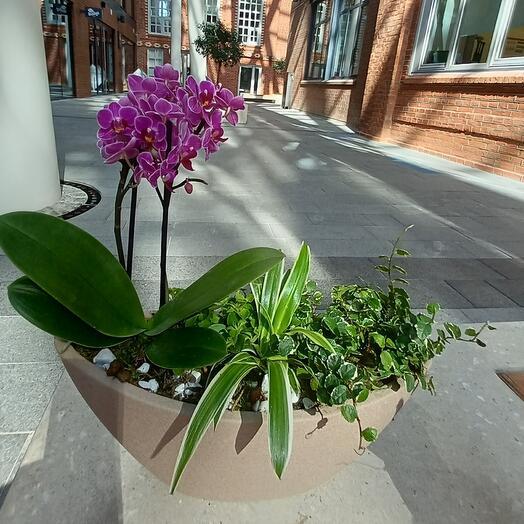 Композиция интерьерная с орхидеей