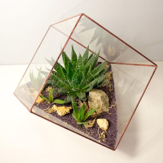 Флорариум в кубе с суккулентом: букеты цветов на заказ Flowwow