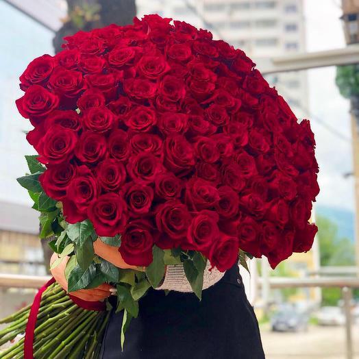 101 метровая Голландская роза