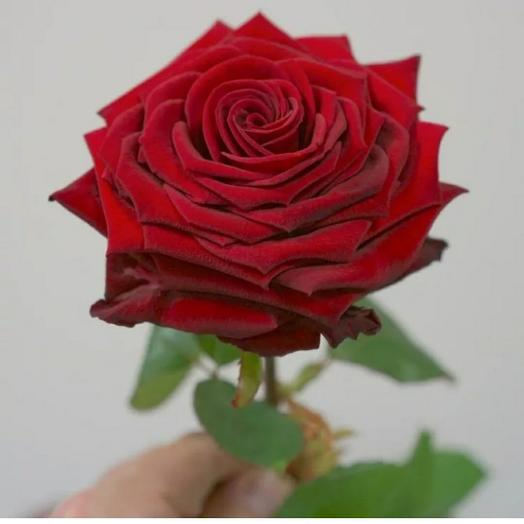 Красная роза Red Naomi 60 см