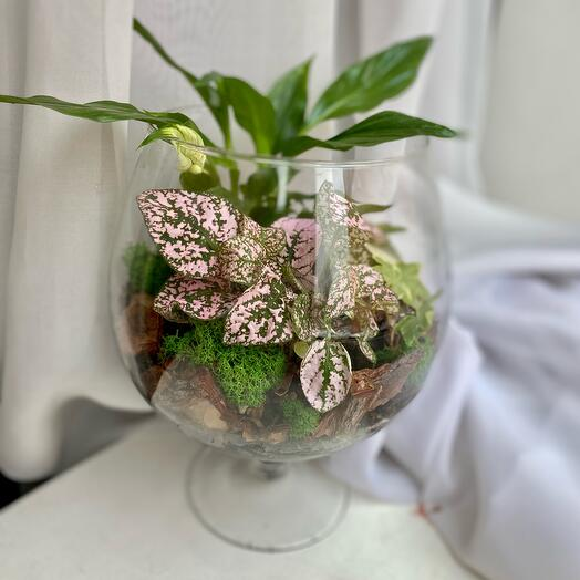 Флорариум «тропический» в бокале