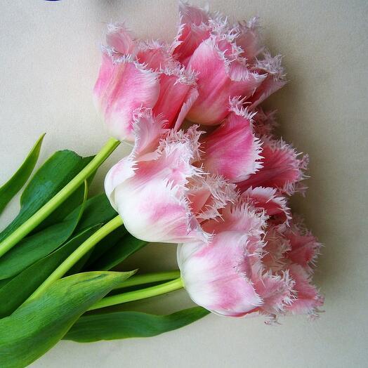 Махровые длинные тюльпаны