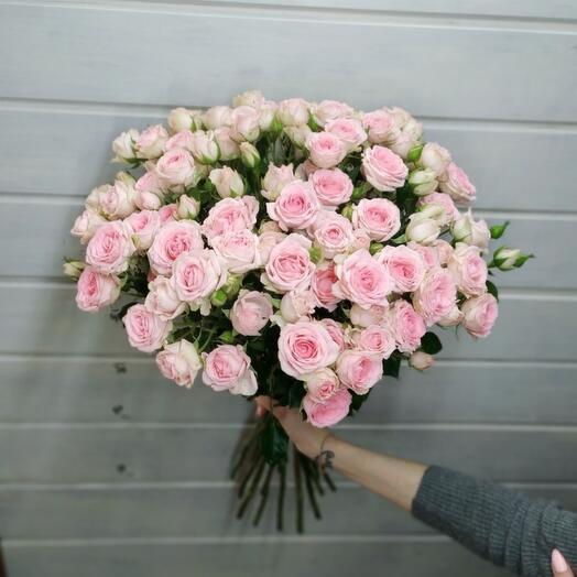 Роза кустовая Голландия 60 см