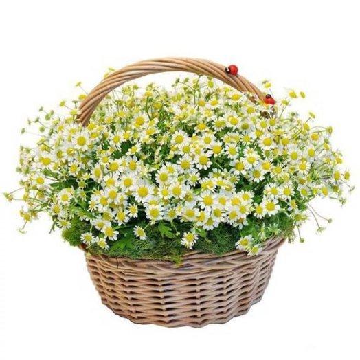 Ромашки в корзине Летняя лужайка: букеты цветов на заказ Flowwow