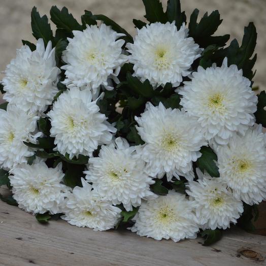 "Букет ""Белые хризантемы"": букеты цветов на заказ Flowwow"