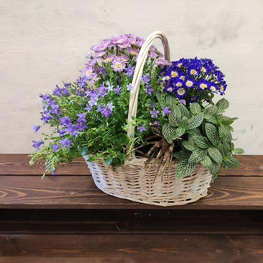 Корзина TROPICS: букеты цветов на заказ Flowwow