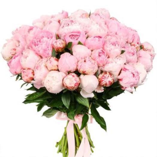 """Букет из 55 голландских розовых пионов """"Монс"""" Сара Бернар"""