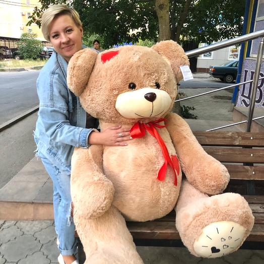 Bear brown big