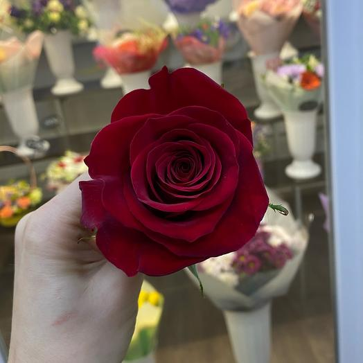 Роза Эквадор 70 см