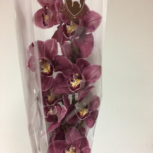 Орхидея цимбидиум ветка
