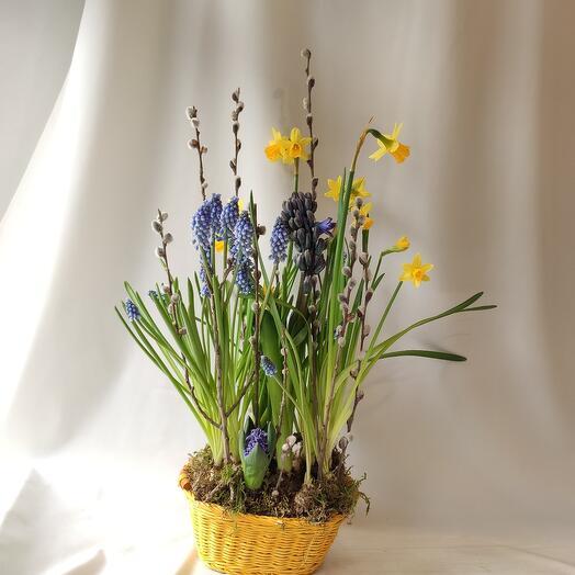 Корзинка Весна