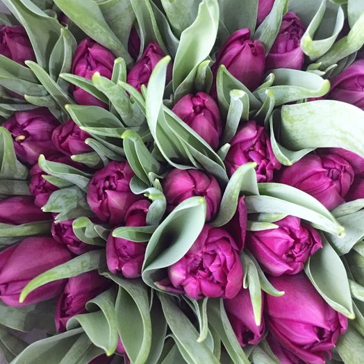 Фиолетовый тюльпан: букеты цветов на заказ Flowwow