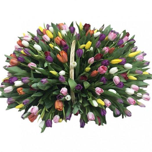 201 разноцветный тюльпан