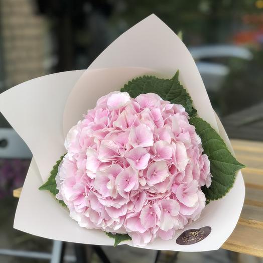 Гортензия розовая: букеты цветов на заказ Flowwow