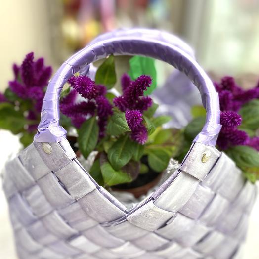 Целозия: букеты цветов на заказ Flowwow