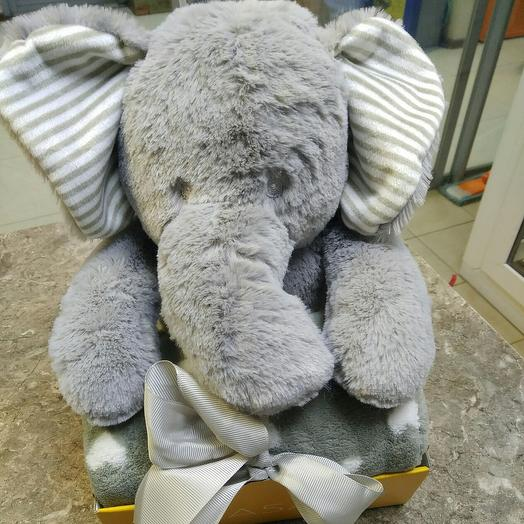 Elephant with a blanket