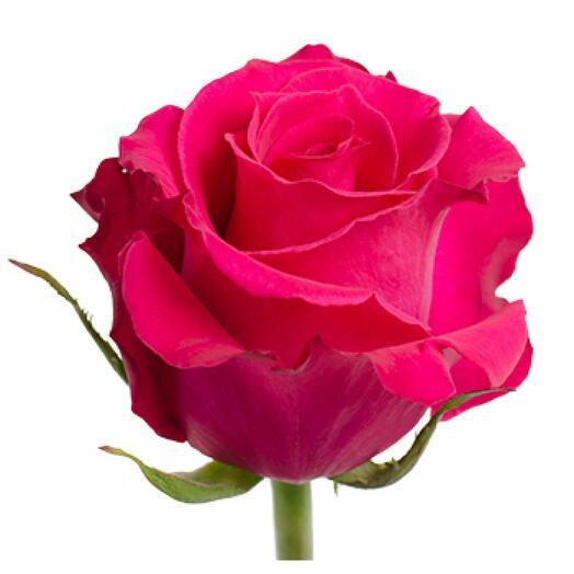 Роза Лола
