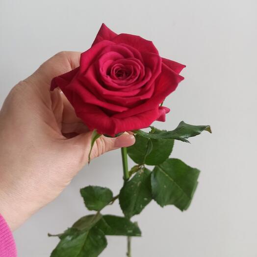 Роза малиновая 40 см
