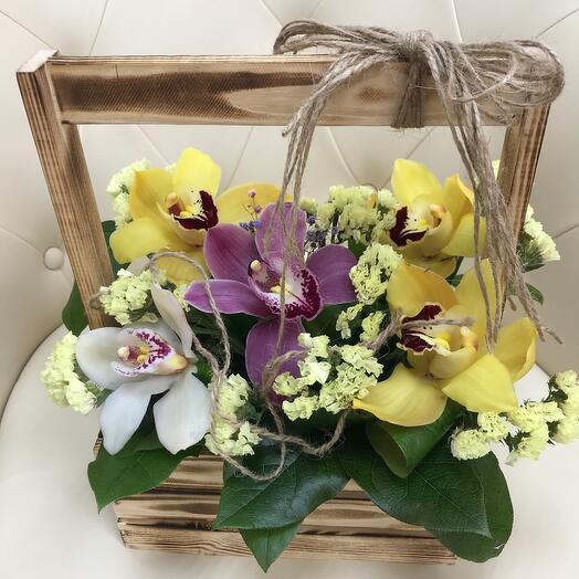 Орхидеи вау