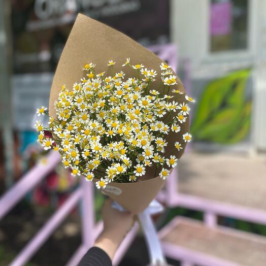 Chamomile-chamomile