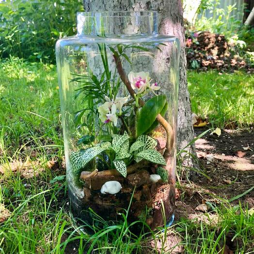 Большой флорариум с орхидеями