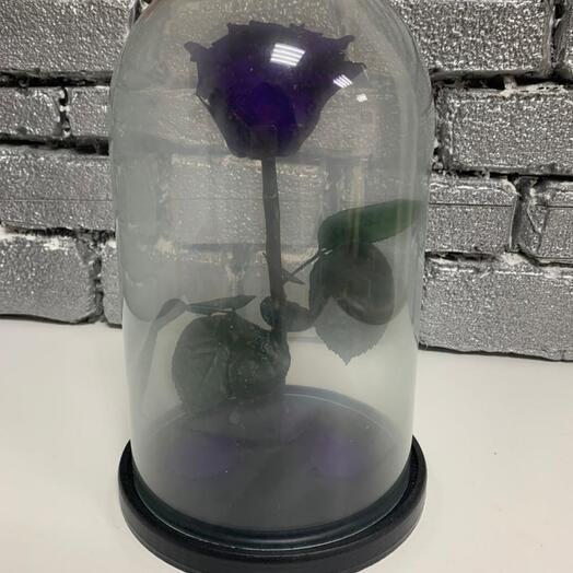роза премиум фиолетовая