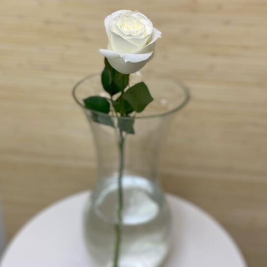 Роза Proud 40 см