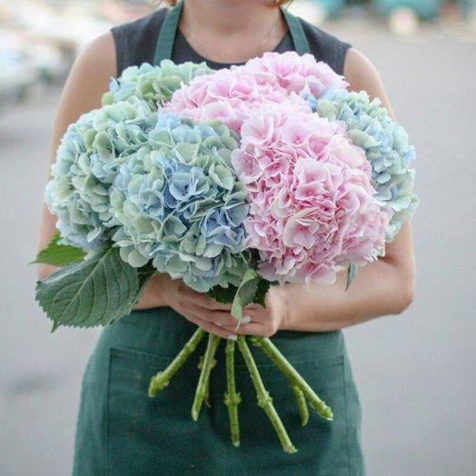 Невероятная гортензия: букеты цветов на заказ Flowwow