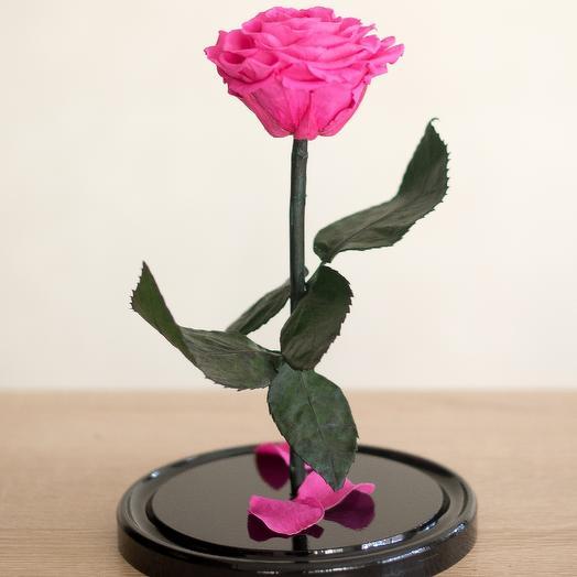 Роза в колбе Медиум малиновая: букеты цветов на заказ Flowwow