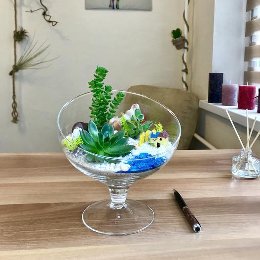 Композиция из суккулентов, коллекция «Ах, море»: букеты цветов на заказ Flowwow