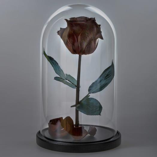 Роза в колбе черная премиум