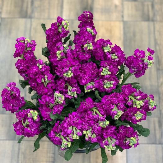 Букет из маттиолы: букеты цветов на заказ Flowwow