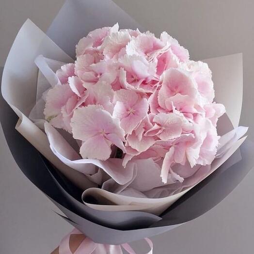 Нежно/розовая красотка гортензия