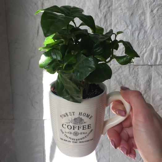 Кофе Арабика: букеты цветов на заказ Flowwow