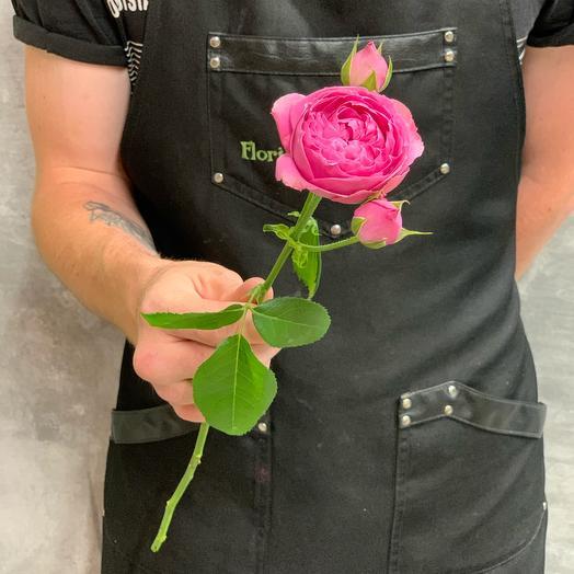 Кустовая Роза сорта Мисти Баблс