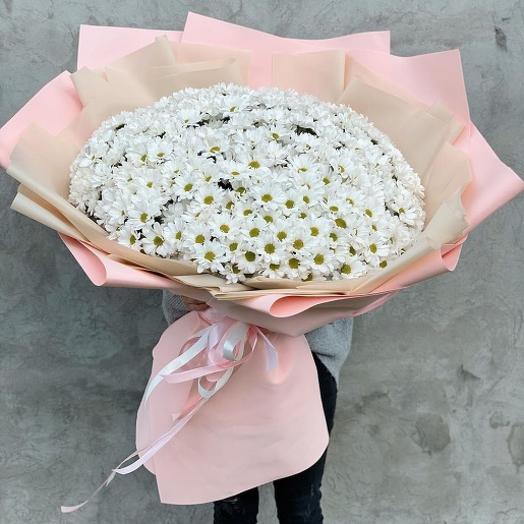 Гигант из ромашковых хризантем
