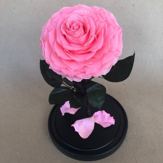 Роза в колбе VIP розовая