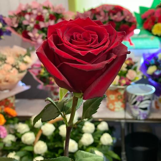 Эквадорская крупная роза 70см