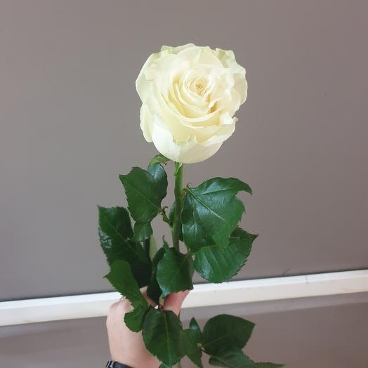 Роза белая 70см