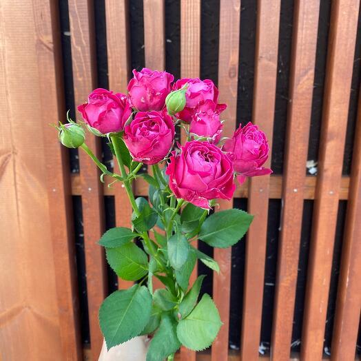 Роза кустовая Марвел