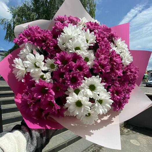 Хризантема 15 шт