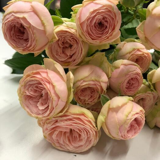 Роза кустовая Павловна