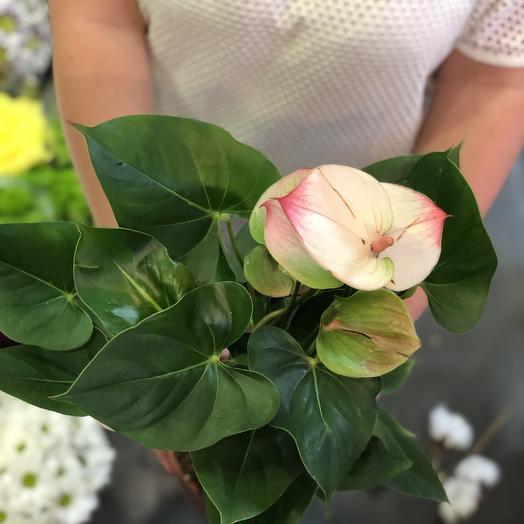 Антуриум бело розово красный: букеты цветов на заказ Flowwow